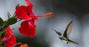 صور صور منوع جميلة , اجمل صور متنوعه في العالم