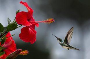 صورة صور منوع جميلة , اجمل صور متنوعه في العالم