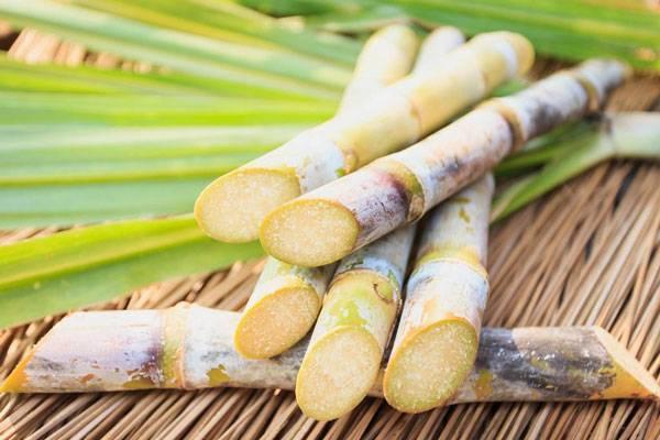 صورة صورة قصب السكر , اجمل الصور لانواع قصب السكر
