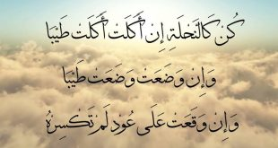 صورة كلمات عربية، نصائح غالية