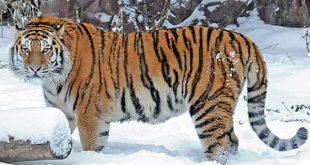 صورة اجمل حيوان في العالم،اجمل ما رأت عينى