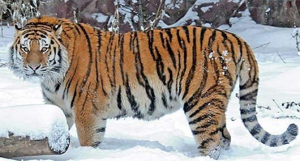 صورة اجمل حيوان في العالم, اجمل ما رأت عينى