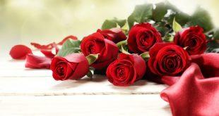 صورة خلفيات ورود جميلة جدا, الوان الورود ومعانيها