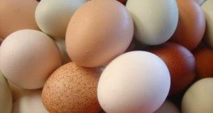صورة كالسيوم وفيتامينات في البيض ,ما فوائد البيض 9930 3 310x165