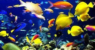 صورة عالم الاسماك, جميع انواع السمك 9947 12 310x165