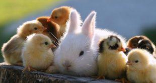 صورة مخلوقات وعجائب، تعبير عن الحيوانات 9972 13 310x165